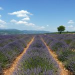 Provence luxury villas